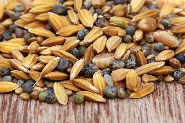 Madár etetés magvak közelkép textúra háttér Stock fotó © bdspn