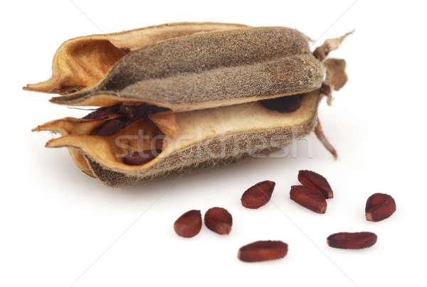 Branco comida campo planta semente Foto stock © bdspn