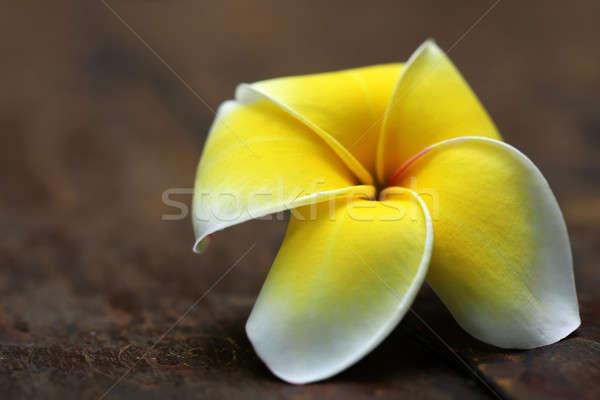 Edad superficie spa planta blanco Foto stock © bdspn
