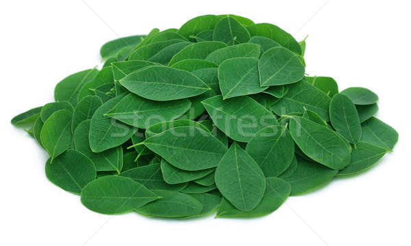 Moringa leaves Stock photo © bdspn