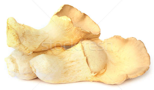 Yenilebilir mantar beyaz bitki pişirme taze Stok fotoğraf © bdspn