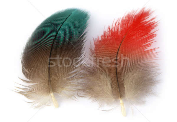 Colorful feather of macaw bird Stock photo © bdspn