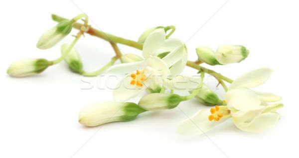 Flor comestível branco árvore floresta natureza Foto stock © bdspn