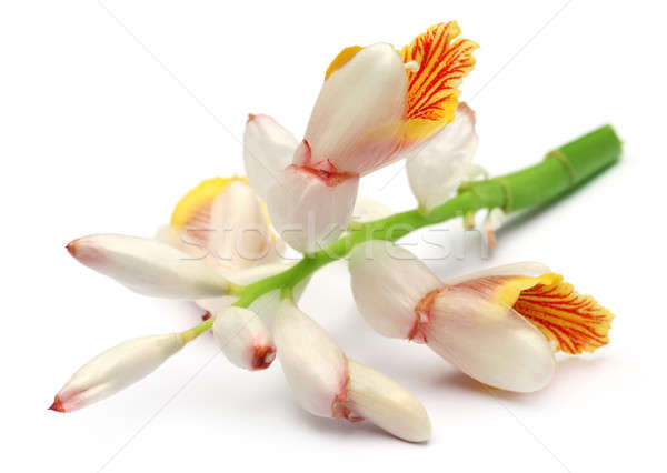 Kardemom bloem witte voedsel Rood thee Stockfoto © bdspn