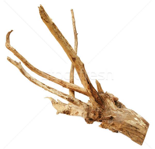 Bog wood  Stock photo © bdspn