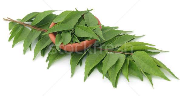 étriller laisse blanche nature feuille vert Photo stock © bdspn