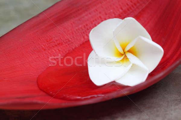 Tropicali naturale superficie fiore estate bella Foto d'archivio © bdspn