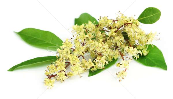 Henna bladeren bloem witte natuur huid Stockfoto © bdspn