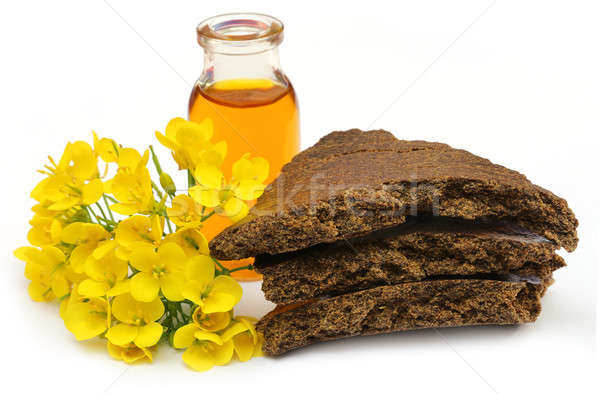 Mustard flowers, oil and cake Stock photo © bdspn