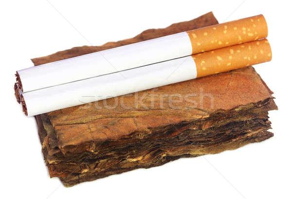 Kuru tütün yaprakları filtre sigara beyaz Stok fotoğraf © bdspn