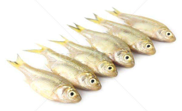 Peixe sudeste da Ásia comida gordura asiático prata Foto stock © bdspn
