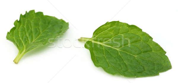 Fresh mint leaves Stock photo © bdspn