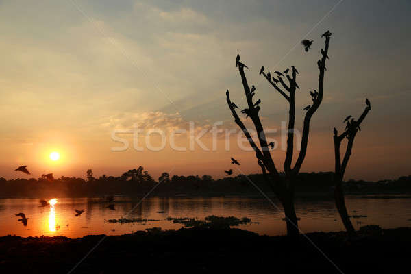 Setting sun behind a river Stock photo © bdspn