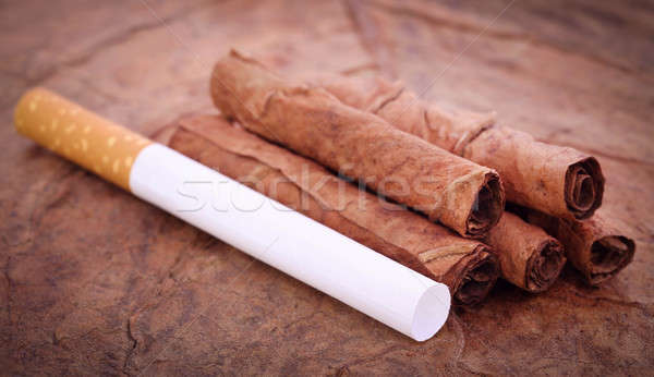 Filter cigarette on dry tobacco Stock photo © bdspn