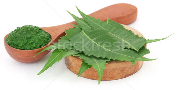 Medicinal neem leaves with ground paste Stock photo © bdspn