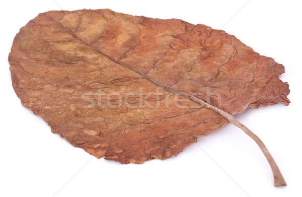 Drogen tabak blad boerderij kleur witte Stockfoto © bdspn