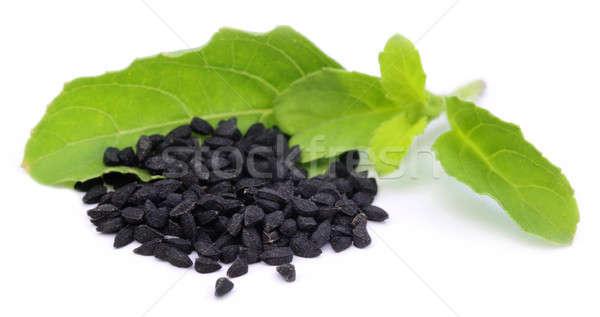 Nigella with medicinal tulsi leaves Stock photo © bdspn