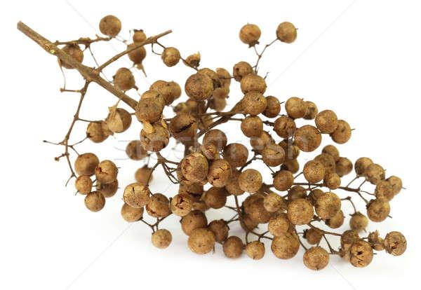 Kına tohumları beyaz doğa cilt bitki Stok fotoğraf © bdspn