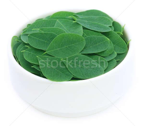 Laisse bol blanche fond vert herbe Photo stock © bdspn