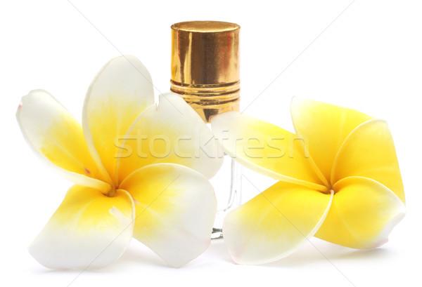 Tropikal parfüm şişe beyaz bitki güzel Stok fotoğraf © bdspn