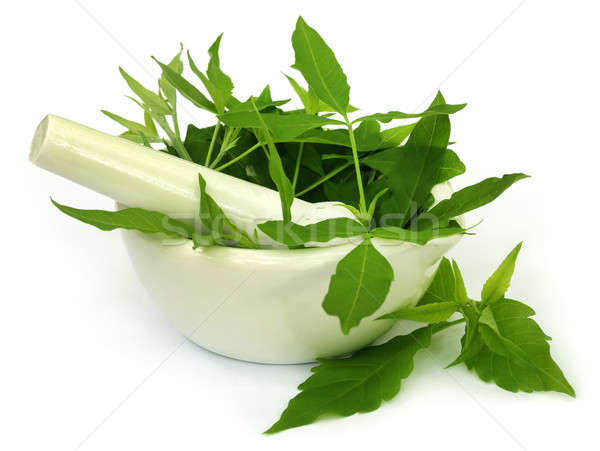 Medicinal Nishinda leaves with mortar and pestle Stock photo © bdspn