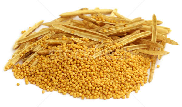 Fresh golden mustard with empty pods Stock photo © bdspn