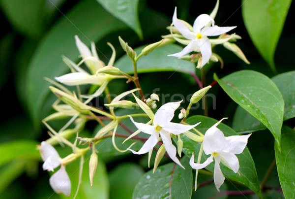 Sous-continent indien fleur fond blanche décoration Photo stock © bdspn