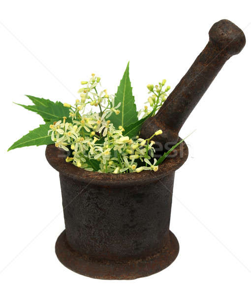 Neem leaves and flower on a vintage mortar Stock photo © bdspn