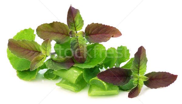 Aloés foco beleza verde medicina Foto stock © bdspn