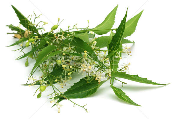 Medicinal neem leaves with flower Stock photo © bdspn