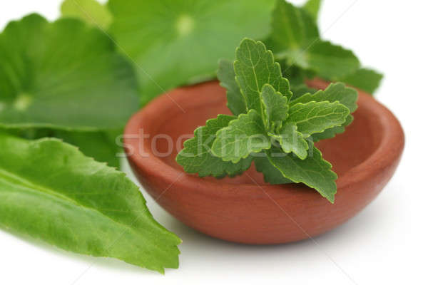 Stevia with other medicinal herbs Stock photo © bdspn