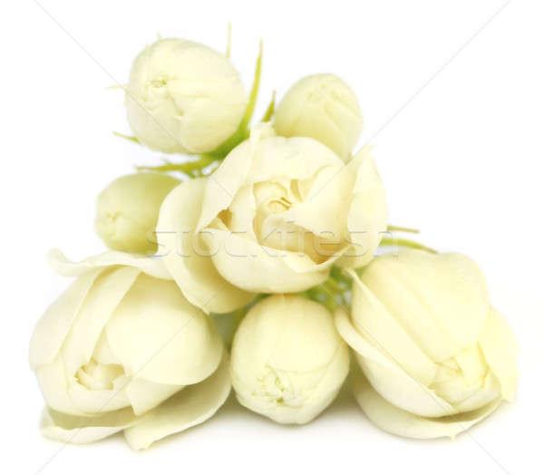 Jasmine flowers Stock photo © bdspn
