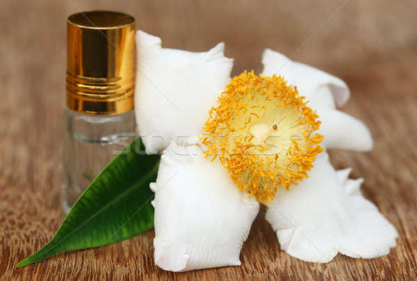 Nageshwar flower of Indian subcontinent with essence bottle Stock photo © bdspn