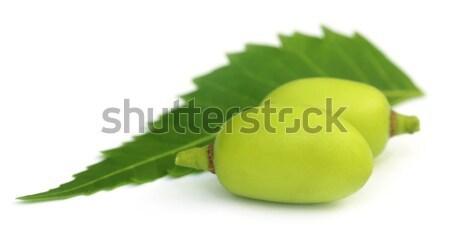 Medicinal neem fruits  Stock photo © bdspn