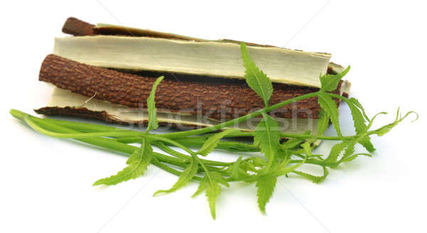 Medicinal neem leaves with bark of tree Stock photo © bdspn