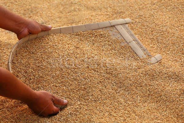 Dourado sementes subcontinente indiano comida mão natureza Foto stock © bdspn