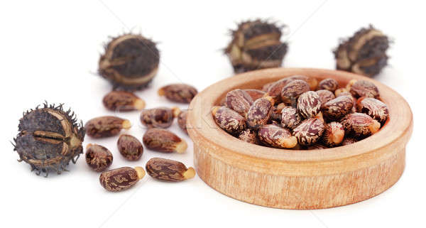 Castor beans Stock photo © bdspn