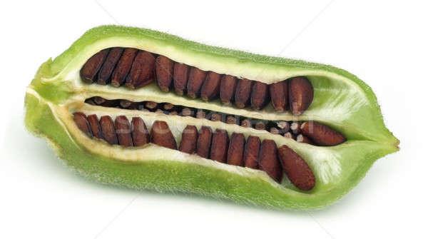 Susam beyaz gıda yeşil bitki tohum Stok fotoğraf © bdspn