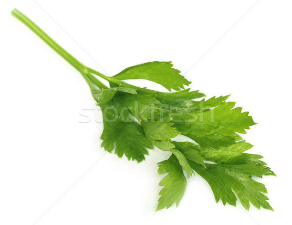 Green celery Stock photo © bdspn