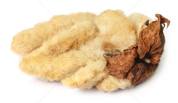 Organic cotton Stock photo © bdspn