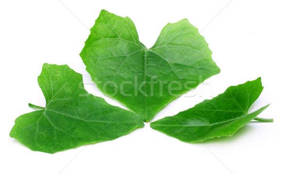 Gyógyászati levelek orvosi levél háttér zöld Stock fotó © bdspn