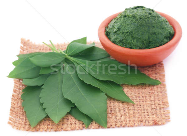 Mashed vitex Negundo Stock photo © bdspn