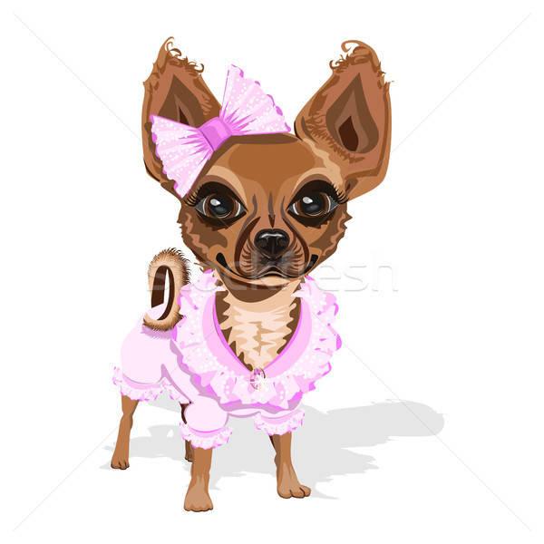 Sweet мало собака розовый одежды Cute Сток-фото © bedlovskaya