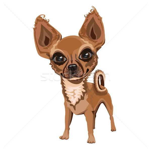 Vrolijk weinig hond mooie gezicht achtergrond Stockfoto © bedlovskaya
