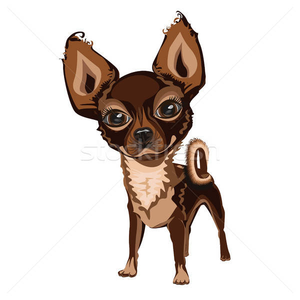 Allegro piccolo cane nice faccia sfondo Foto d'archivio © bedlovskaya