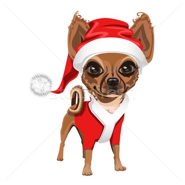 Foto stock: Pequeno · cão · seis · cara · projeto · fundo