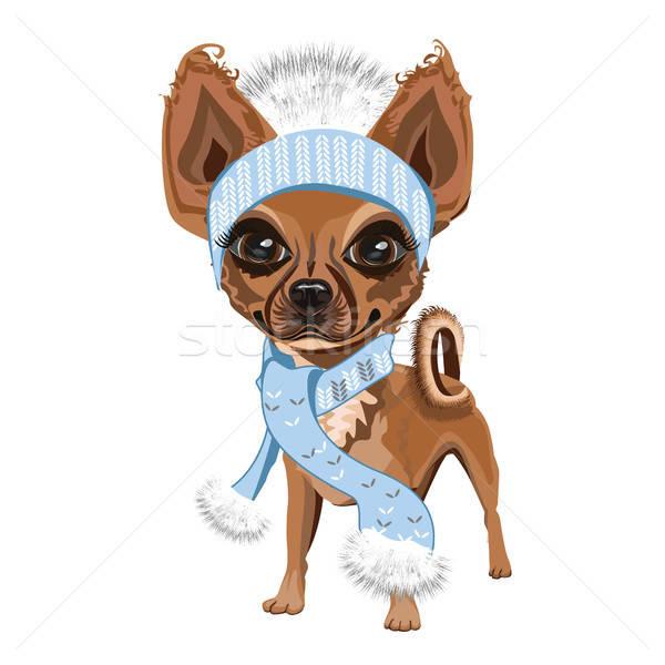 Pequeno cãozinho seis cão tricotado cara Foto stock © bedlovskaya
