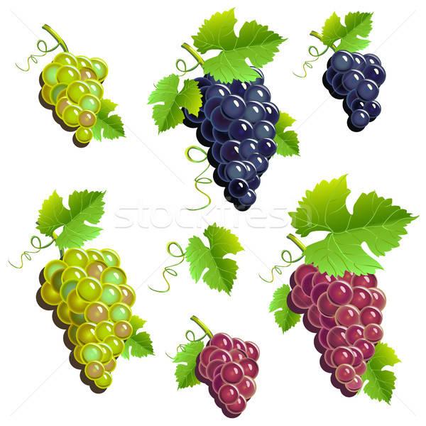 Uve set alimentare vino natura impianto Foto d'archivio © bedlovskaya