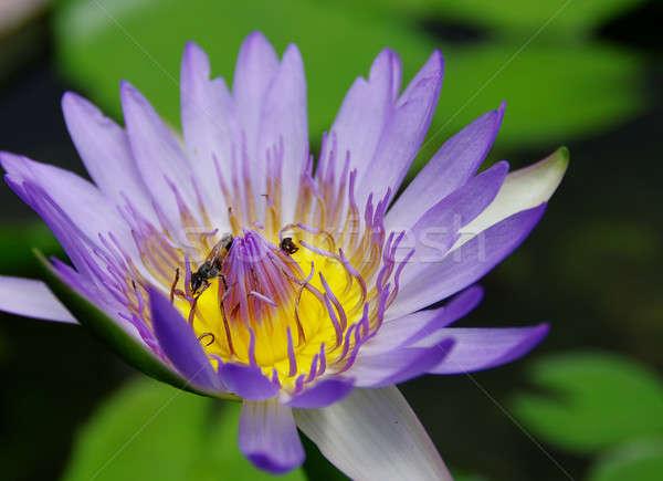 Mor arı doğa güzellik göl Stok fotoğraf © beemanja