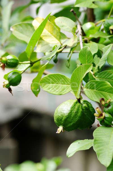 Taze ağaç doğa elma yaprak meyve Stok fotoğraf © beemanja